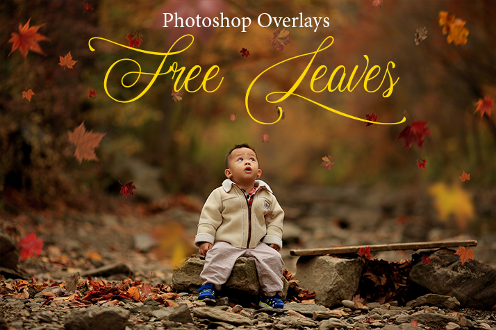 leaves overlay photoshop free poster nature