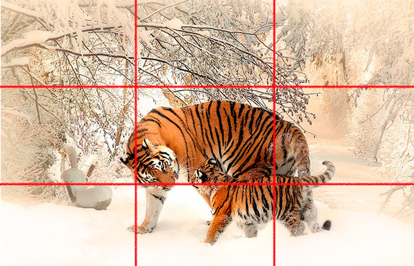 Example of the rule of thirds - tiger photo